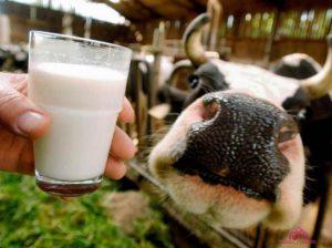 Молоко Нижний Тагил